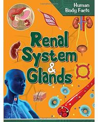 Renal System and Glands- Human Body Facts