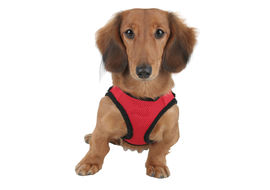Puppy Love Air Mesh Harness for Small to Medium Dogs, x large , red
