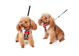 Puppy Love Tuxedo Body Harness for Toy Breed Dogs, small