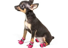 Pet Artist Reflective Waterproof Anti Skid Socks Shoes for Toy Dogs and Cats, pink, large