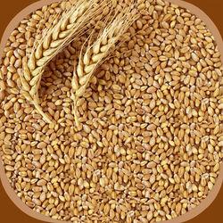 Wheat/Gothumai, 1 kg