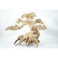 Bonsai Driftwood