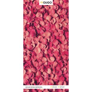 ALSTONE OLIGO WOOD POLYMER COMPOSITE BOARD (8 x 4 FEET) - ROSA SERICEA, both side, gloss, 12 mm