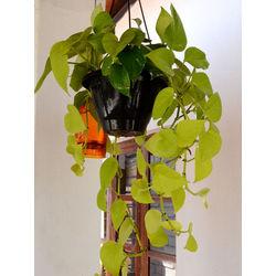 MUD FINGERS Neon Plant