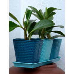 MUD FINGERS Tin Pots Peperomia