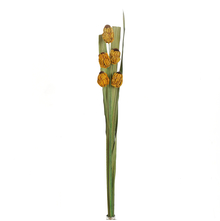 Solitary Medium Wicker Flower - @home by Nilkamal, Yellow
