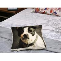 Dog 40X40CM Cushion Cover, Multicolor