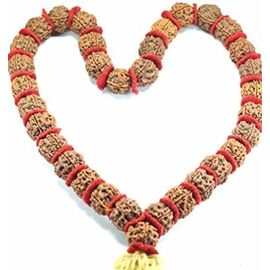 Natural Original 5 Mukhi Rudraksha Kantha Mala Big Beads (32+ 1= 33 Beads)