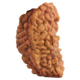 Asli Nepali Rudraksha Ek Mukhi To Seven Mukhi Set Of 7 Rudraksha In Pack